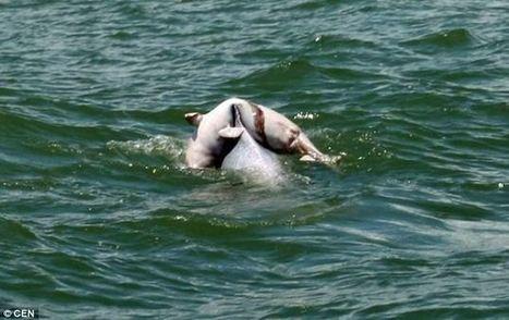 Les cétacés pleurent leurs morts, juste comme nous   Surprenante vie sous-marine   Scoop.it