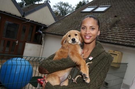 """Semaine du chien guide d'aveugle. """"Un lien exceptionnel entre le chien et son maître aveugle""""   CaniCatNews-actualité   Scoop.it"""