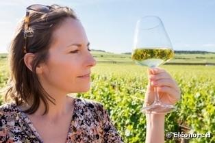 Pesticides et santé : pourquoi il faut éliminer les vins non bio | Les filières bio | Scoop.it