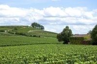 Vendanges 2012 : découvrir les vignobles de Bordeaux - CommentCaMarche.net | Oenotourisme en Entre-deux-Mers | Scoop.it