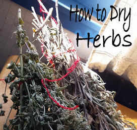 Random and Crafty: How to dry herbs   Sewing, Craft, Knitting, Jewelry, and Everything Else Handmade   Scoop.it