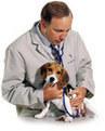 Ser veterinario no es solamente cuidar a los animales - Mascotas Foyel | veterinaria | Scoop.it