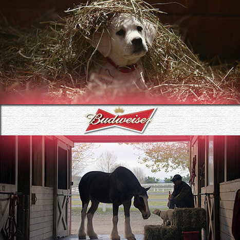 Super Bowl 2015 commercials: Anheuser-Busch bringing back puppy ... - Alabama's News Leader | The Dog Connection TV | Scoop.it