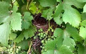 Il vino biologico | Didattica | Slowine | Wine in Tuscany | Scoop.it