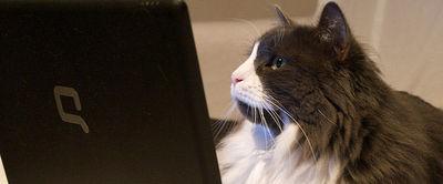 Yummypets, le réseau social des animaux   Univers de la veille   Scoop.it