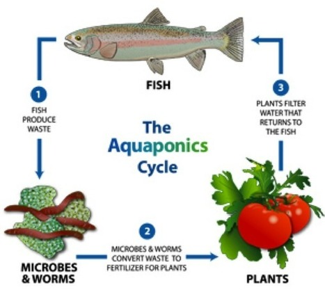 Ow.ly - image uploaded by @hydroponic247 | Aquaponics | Scoop.it
