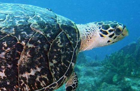 Club de plongée en Guadeloupe, Nautica Plongee Caraibes | Caraibes | Scoop.it