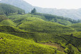 Munnar Tour Packages, Book Munnar Holiday Packages at Yatra.com, India   Holidays Information-India and World   Scoop.it