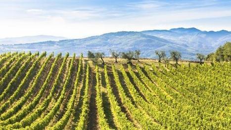 Drinking in the views at Chianti | Italia Mia | Scoop.it