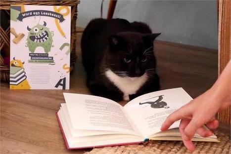 Kinderen lezen voor aan katjes | Kijken hoe dit gaat | Scoop.it