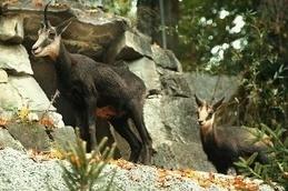 Urgent action needed to halt biodiversity loss - swissinfo.ch | GarryRogers Biosphere News | Scoop.it