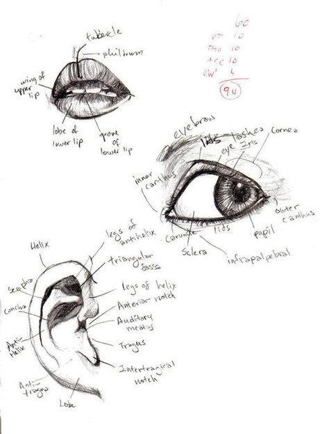 Anatomy- Eye, Lip, Ear 1 by tatsumakichan on deviantART   art sculpture enseignement   Scoop.it