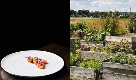 Innovation & Startup : Un restaurant biologique qui réduit les déchets et qui enseigne l'approche « de la ferme à la table » | HelloBiz | Centre des Jeunes Dirigeants Belgique | Scoop.it