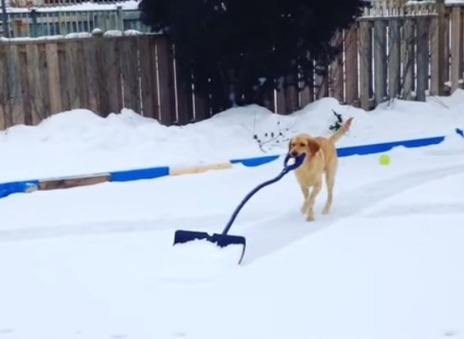 Watch the Most Selfless Dog in the World Shovel Snow - TIME | Dog Lovers | Scoop.it