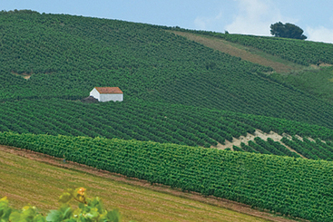Portuguese white wine coming into its own | Vitabella Wine Daily Gossip | Scoop.it