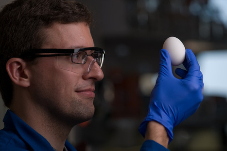 UCI, fellow chemists find a way to unboil eggs | Food safety and sustainability | Scoop.it