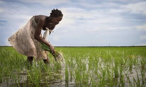 A Leading Scientist Promotes Agroecology in the Movement Against Pesticides   Questions de développement ...   Scoop.it
