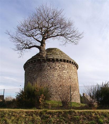 Elisez l'arbre de l'année 2013 | Revue de Web par ClC | Scoop.it