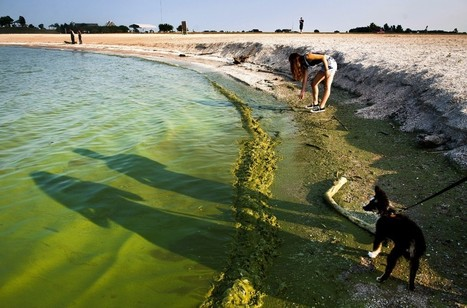 Climate change and fertilizer runoff spell bad news for Lake Erie | The Rundown | PBS NewsHour | climate change | Scoop.it