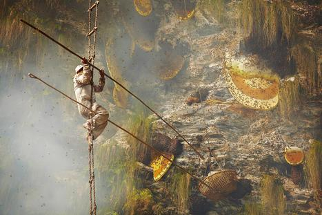 Honey Hunters' Ancient Art Faces Uncertain Future - NBC News | Ancient Origins of Science | Scoop.it