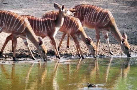 Poaching wars – 121 years of unceasing battle in Zululand's uMkhuze | Oceans and Wildlife | Scoop.it