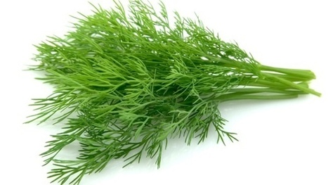 Dill is Full of Health-Protecting Nutrients | Honest Opinions | Scoop.it
