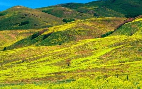 EPA Factsheet: Puccinia thlaspeos strain woad (dyer's woad rust) | mikrobiologija | Scoop.it
