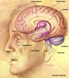 Does Self-Awareness Require a Complex Brain? | Brainwaves, Scientific American Blog Network | Learning, Brain & Cognitive Fitness | Scoop.it