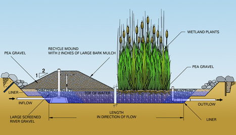 Constructed Wetlands   Activism, society and multiculturalism   Scoop.it