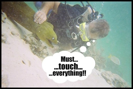 5 Types of Divers You Don't Want To Be | Scuba Diving | Scoop.it
