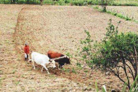 Modernización del catastro rural, clave en la transformación del campo - ElEspectador.com   Agricultura   Scoop.it