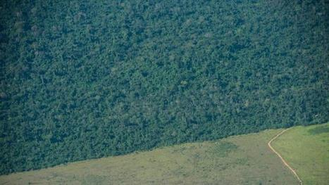 Amazon deforestation leaps 16 percent in 2015 | Erba Volant - Applied Plant Science | Scoop.it