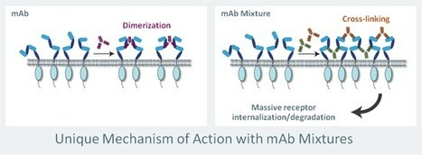 mAb Mixtures and Cancer - symphogen | Immunology and Biotherapies | Scoop.it