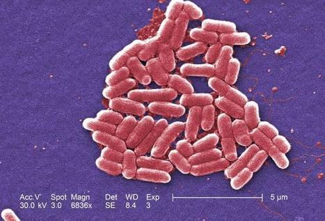 La flore intestinale évolue vite : la faute à la vie moderne ? | Nos amies les bactéries | Scoop.it