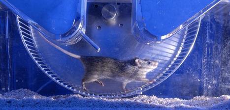 Pourquoi la recherche animale reste indispensable   EntomoScience   Scoop.it