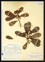 Recensement des herbiers - OCIM | Réseau Tela Botanica | Scoop.it