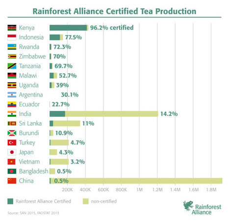 Sustainable Tea Production: Where in the World | Fair and sustainable economy | Scoop.it