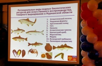RUSSIAN FEDERATION: Russian fish producers may oust Norwegian imports in five years | seafood marketing | Scoop.it