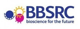 Pesticide combination affects bees' ability to learn | BIOSCIENCE NEWS | Scoop.it