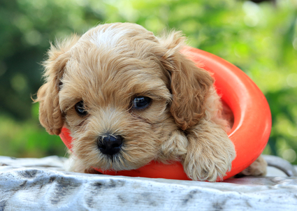 Socializing Your Puppy – The Right Way | In Your Pet's Best Interest | Scoop.it