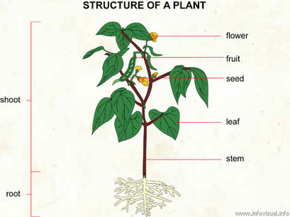 Plant | Animals and Plants | Scoop.it