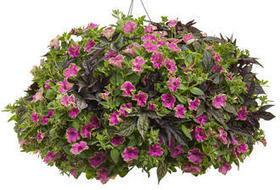 Proven Winners | How to Grow a Gardener | Annie Haven | Haven Brand | Scoop.it