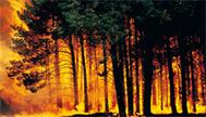 (EN) - Bushfire Glossary   AFAC Knowledge Web   Incêndios Florestais   Scoop.it