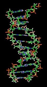 From chimps to chickens: how a little DNA can make a lot of difference   DNA & RNA Research   Scoop.it