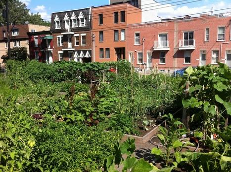 Balades en agriculture urbaine 2013 : cet été, découvrez le Montréal agricole! - Nouvelles - Agriculture urbaine Montréal | Agriculture urbaine, architecture et urbanisme durable | Scoop.it