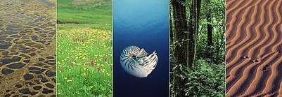 Major Biomes of the world | Year 9 Geography - Asia and its biomes | Scoop.it