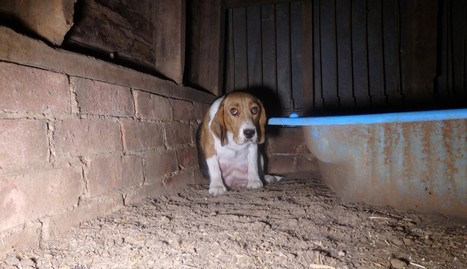Puppy Mill Mother So Scared She Hides Her Babies In The Wall | Nature Animals humankind | Scoop.it