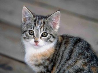 The Different Personalities of Tabby Cats | beauty-lover | Scoop.it