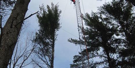 La forêt de Harvard, pionnière de l'écologie de demain - le Monde | Actualités écologie | Scoop.it