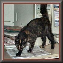 Tortoiseshell cats | About Pets, Lifestock and Wild Animals | Scoop.it